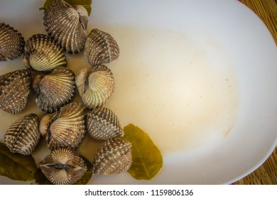 Boiled blood clams on white dish with copy space for your text. Steamed cockles frame with copy space. Blood cockles or blood clams (Tegillarca granosa) background for seafood concept.