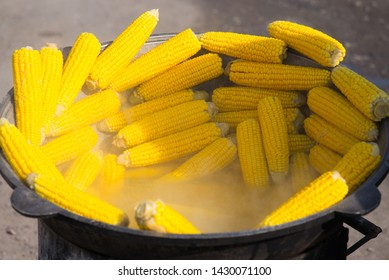 Boiled corn and ready to eat. The lower cobs are in water, the upper cobs are not covered by water
