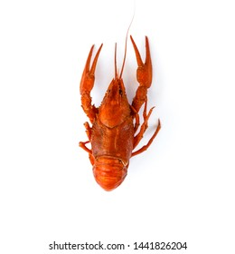 Boiled crawfish isolated on white. top view. Flat lay.