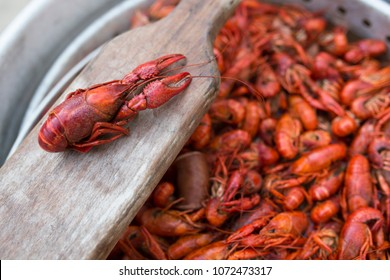 Boiled Crawfish in Pot with Paddle