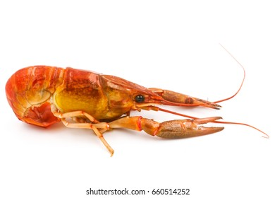 Boiled Crayfish or Freshwater lobster on a white background.