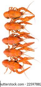 Boiled crayfish. isolation