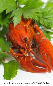 Boiled crayfish on isolate white background with green