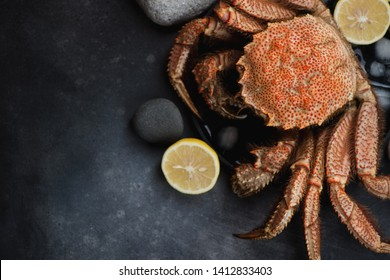 Boiled horsehair crab or hairy crab over dark metal background, horizontal shot with copyspace, view from above