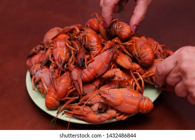 Boiled large red beautiful river crayfish on a green plate on a brown table background.Human hands spread crayfish on a plate.Crayfish on the table.Delicious food.Close up.