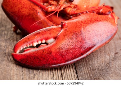 Boiled lobster on wooden background