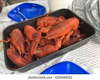 Boiled lobsters in a roasting pan on a table with blue plastic plates.