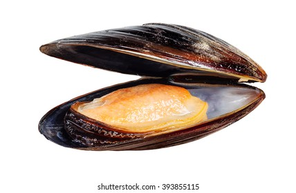 Boiled mussel isolated on white