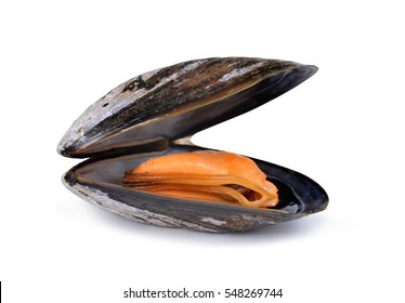 Boiled mussel isolated on a white background.