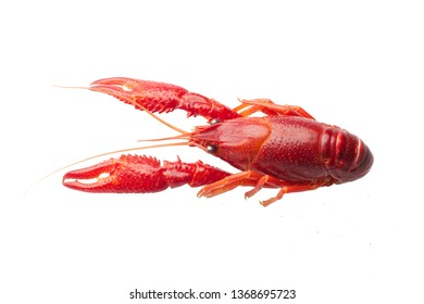 Boiled red crawfish isolated on white background