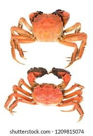 Boiled Shanghai hairy crab or Chinese mitten crab (Eriocheir sinensis) isolated on white background.
