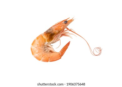 Boiled shrimp (Litopenaeus vannamei) isolated on white background with clipping path.