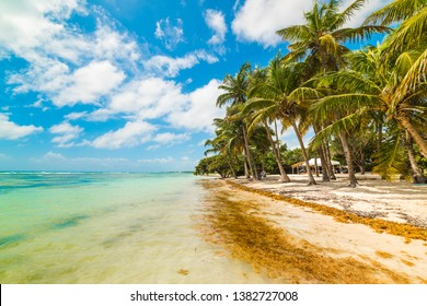 Bois Jolan beach in Guadeloupe, French west indies. Lesser Antilles, Caribbean sea