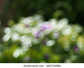 Bokeh background, gentle curve of white and purple against black and green.