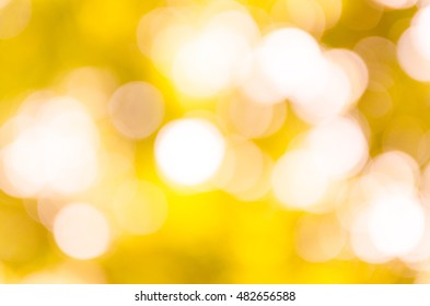 bokeh background from nature under tree shade