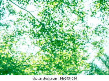 Bokeh background texture natural light green leaves