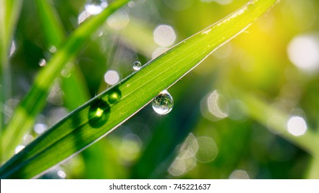 Bokeh blur, Dew on top of grass and morning light, Morning sunshine with bokeh from dew.