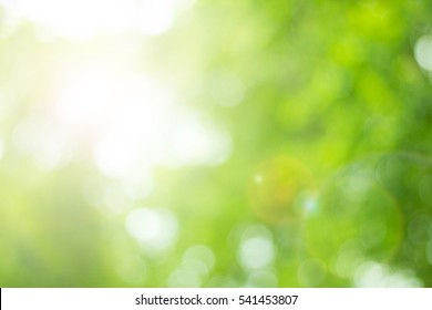 Bokeh blur leaf light green color  background concept for farm soft spring Banner, fresh ozone decoration, multiply retro tone bio eco csr. Abstract Healthy life growth in holy peace.