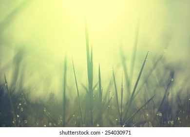 bokeh blure sunrise golden lighting and dew on top grass