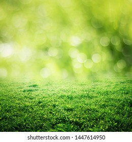Bokeh grass and green meadow. Summer background