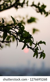 Bokeh of green foliage with background of the blurred red sunset in downtown Bangkok, the capital of Thailand in southeast Asia, in vertical view.