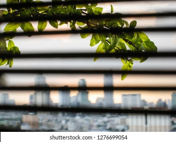 Bokeh of green foliage with background of the blurred skyscraper in downtown Bangkok, the capital of Thailand in southeast Asia, and foreground of bamboo blind.