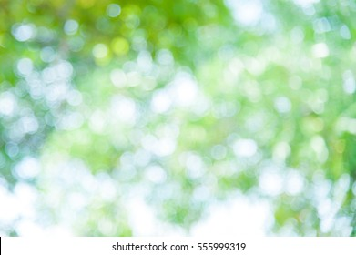 Bokeh green of the trees in nature.