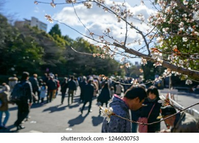 Bokeh of Japanese people walking to a shrine for the first shrine visit of the year, with a flower branch in focus.
