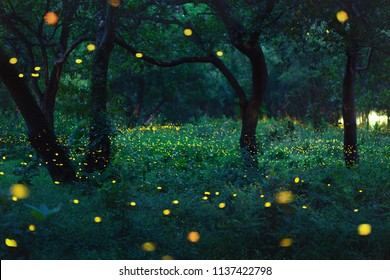 Bokeh light of firefly flying in forest at dusk, Prachin Buri, Thailand