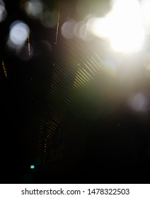 Bokeh light with spider web, Abstract nature background