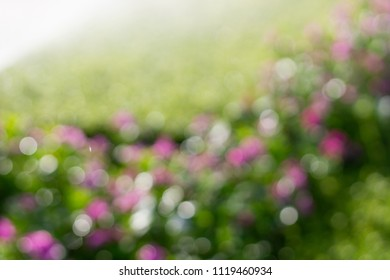 Bokeh nature background, Defocus of purple flower and green leaves.