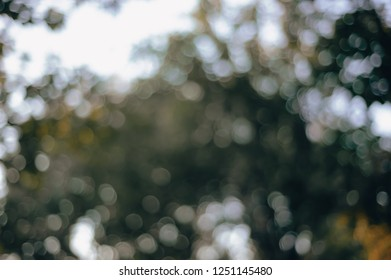 Bokeh of Nature. -vintage style picture and vintage color