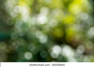 bokeh on nature background at sunny day. subject is blurred