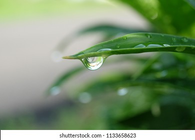A bokeh picture of water droplet from a plant taken after the rain.