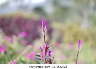bokeh purple flower
