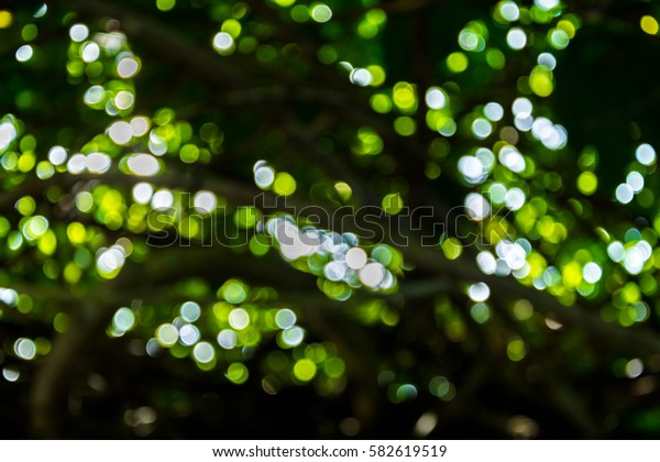 bokeh tree and background blur focus
