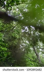 bokeh tree leaves - portrait