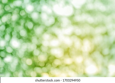 bokeh tree nature beautiful for background, abstract bokeh green forest background, blurred nature with sunlight for background