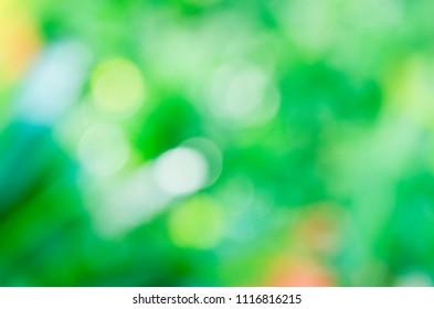 Boken green lights with flower plant in the garden