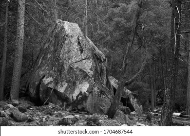 Bolder in the woods in Black and white
