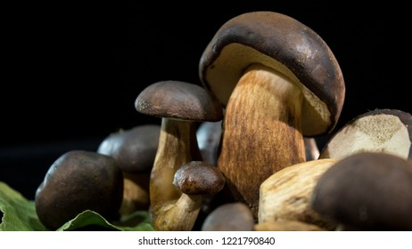 Boletus badius. Edible mushrooms with a brown hat on a black background