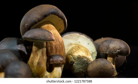 Boletus brown. Brown mushrooms on a black background. Edible mushrooms