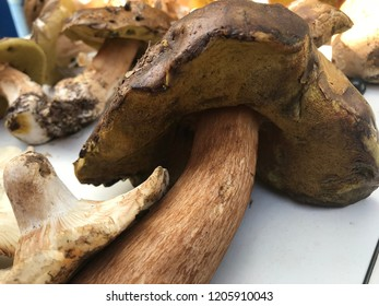 Boletus edulis, Cep, Porcini or Penny Bun Bolete. Mushrooms on the white service