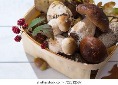 Boletus edulis, cepe, porcini mushrooms unwashed on white wooden background, tasty food from forest