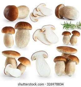 Boletus edulis (king bolete) isolated on white background. Collection.