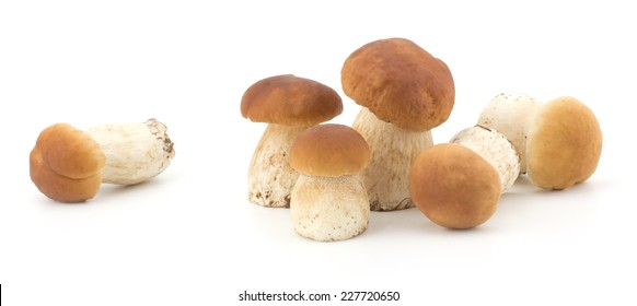 Boletus edulis mushroom isolated on white background close up