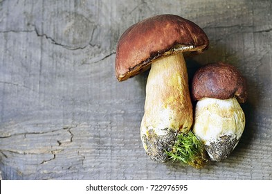 Boletus edulis mushrooms on old wooden background.Autumn Cep Mushrooms.Gourmet food.Copy space.