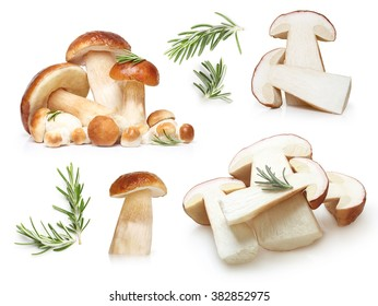 Boletus Edulis mushrooms and rosemary twig isolated on white background.