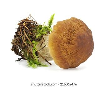 Boletus Edulis or porcini mushroom with moss on a white background.