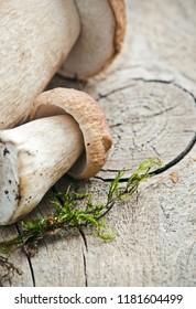 Boletus mushrooms close up
